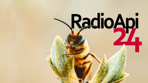 Radio Api24